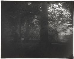 untitled [fredericksburg # 10] by sally mann